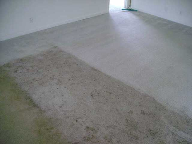 CarpetCleaning1
